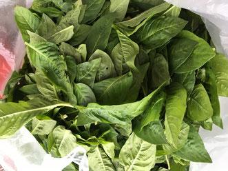 藍の葉・木の葉を水と一緒にミキサーに入れ細かく砕き染料として使います。