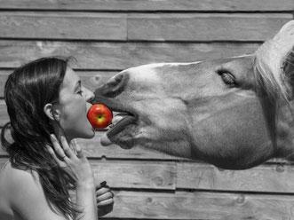 Karine Gougeon propriétaire ecurie kalin jument haflinger partanent pomme