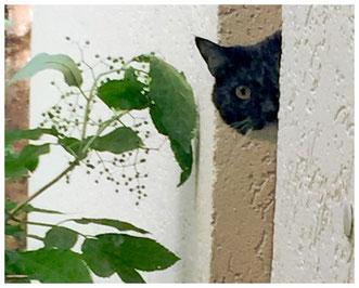 Katzentreppe in der Nische