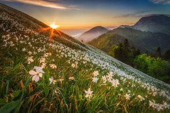 Alpe-Adria-Trail. Bergwiese mir Fernblick