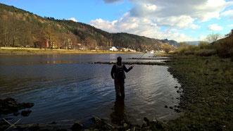 Wurfschule an der Elbe-Flyfishing-Dresden-Sebnitz
