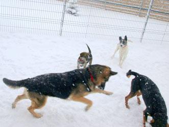 MEINE verspielten Schnee-Hunde <3 !