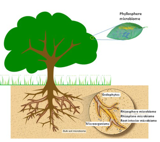 Imagen tomada de: http://www.citrushlb.org/citrus-microbiome/