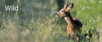 Bücher & Broschüren - Wild | Institut für Tierökologie und Naturbildung