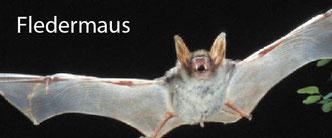 Bücher & Broschüren - Fledermaus | Institut für Tierökologie und Naturbildung