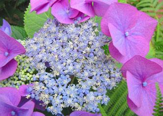 Blume aus dem Garten für das Kunsttherapie-Angebot von Helen Wissen