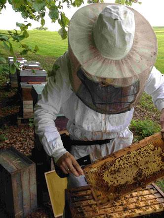 Imker in Schutzkleidung entnimmt eine Honigwabe aus dem Bienenstock