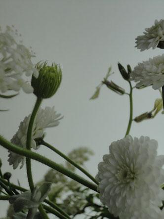 花セラピー