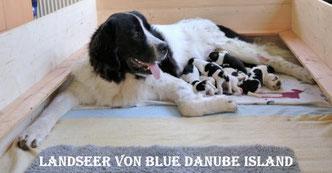 Landseer Zuchtstätte - Blue Danube Island