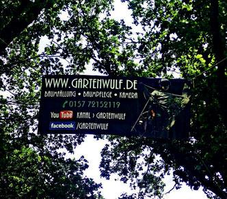 Installation des eigenen Banners auf dem Tag der offenen Tür bei GartenBaumschule Lieven hoch oben zwischen zwei Eichen