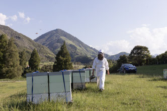 Apiculteur et ses ruches en Nouvelle-Zélande