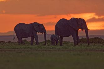 Wildlife Fotografie, Afrika, Elefanten, Tiere, Uwe Skrzypczak,