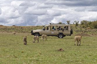 Wildlife Fotografie, Afrika, Fotosafari, Tiere, Uwe Skrzypczak,