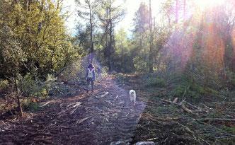 """""""Les forêts précèdent les hommes, les déserts les suivent"""" (Chateaubriant) photo D.Lesoil"""