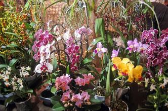 de nombreuses variétés multicolores