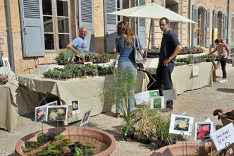 succulentes et plantes aquatiques