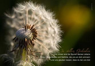 Trauerkarte, Trauerspruch, Spuren deines Lebens, Löwenzahn, Pustblume, immer sind da Spuren deines Lebens