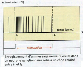 Source: Hachette SVT doc Bp37.