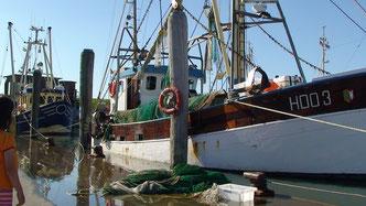 Krabbenkutter im Hafen von Pellworm
