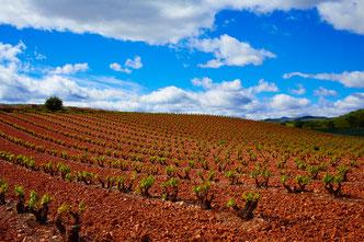 Rebberg Rioja