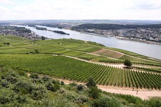 Rheingau Rhein Wein