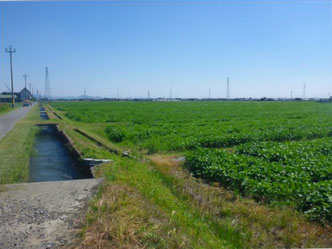 田畑・用水路の写真