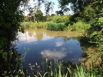 les pièces d'eau sont des réservoirs de biodiveristé