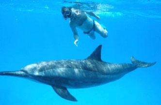 Delfin Reisen, Yolanda Hochstrassen, Ägypten Reisen