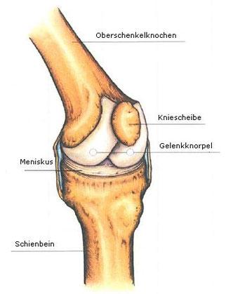 Das Knie - Dr. Grübl Orthopäde in Wien Mauer