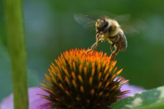 Pflanzenheilkunde Webinare Foto: Natalie Hilgner