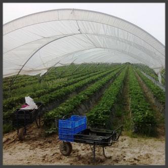 Kapitalistische Landwirtschaft um Almeria und Huelva Spanien