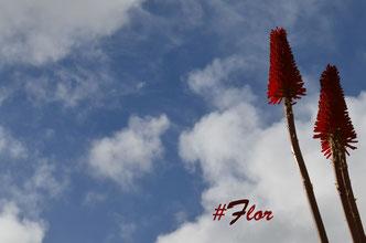 Un pequeño detalle como una #Flor da grandeza a una foto sin futuro.