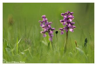 Fleurs et petites bêtes