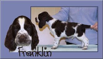 Felicitous Franklin