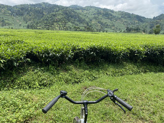 A day/multi-day cycling tour - Green, clean and Beautiful