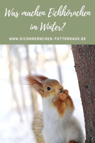 Eichhörnchen im Winter_eichhoernchen-futterhaus.de