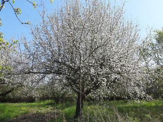 Der Frühling steht in den Startlöchern - es geht wieder los!