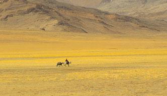 Ladakh, Reise, Privatreise, individuell, Trekking, Zanskar