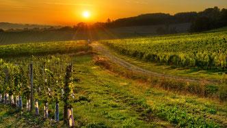 Bergerac vineyards