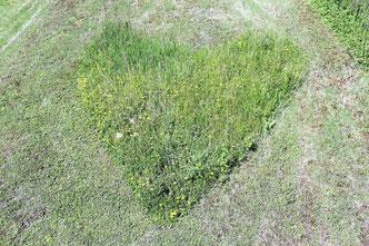 Ein herzförmiges Gras-Graffiti in der Magerwiese