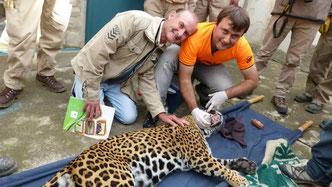 Guillermo Burnes con su padre, Carlos, tras intervenir a un Jaguar en Bolivia