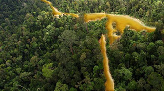 Guayana Francesa. Foto: Rainforest Rescue