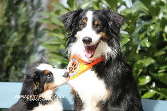 Ausbildung Begleithunde, Therapiehunde, Behindertenbegleithunde und Seniorenbegleithunde