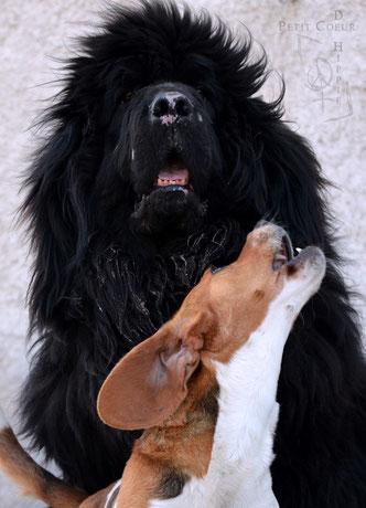 Deux amours de chien !