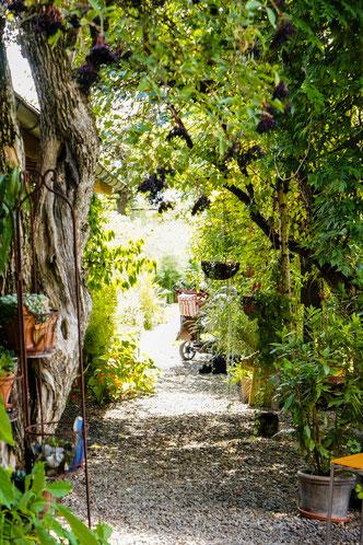 Kiesweg durch grüne Sträucher und Bäume