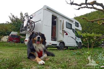 Wohnmobil mit Hund, Wandern mit Hund, mein Wanderhund Ari, Andrea Obele,