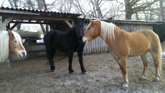 hier in ihrem neuen zu Hause, mit ihrer großen Liebe und Herdenchef :-)