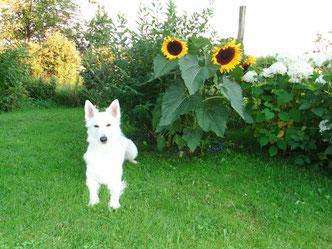 Tara im Garten