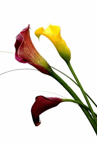 Fleurs 2012_004ED