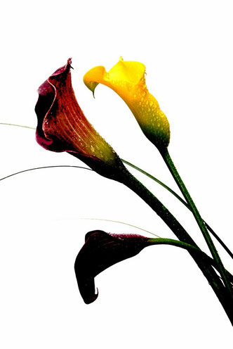 Fleurs 2012_006ED